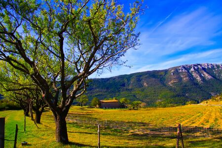 View beyond row of trees on isolated valley with French farm house and mountains background against blue sky with cirrus clouds - Gorges du Verdon, Provence, France