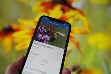 Viersen, Germany - July 9th 2020: View on hand holding mobile phone with german nabu (Naturschutzbund) insect counting and identification app. Blurred flowers background. (Focus on screen picture)