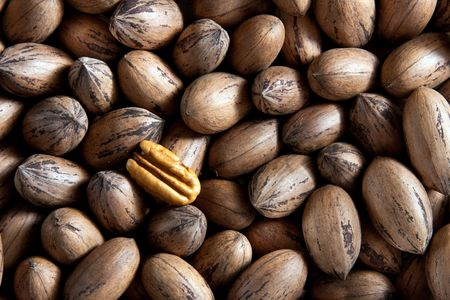 unsaturated: Pecan nuts in and out of shells