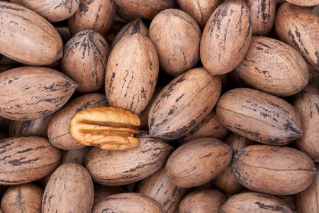 pecan: Pecan nuts in and out of shells