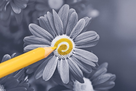 Flower Coloring Reklamní fotografie