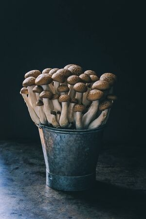 Brown Shimeji mushrooms in a bucket