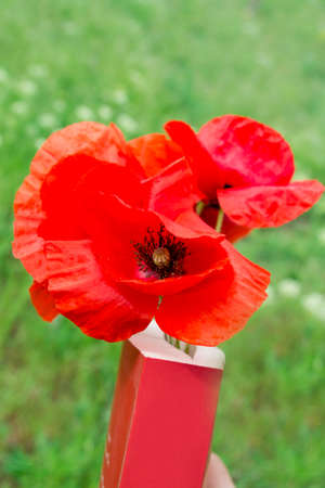 book with poppy on grass