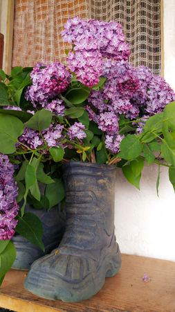Bouquet of lilacs in a rubber boot Stock Photo
