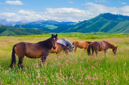 夏の緑の牧草地に放牧される馬の群れ