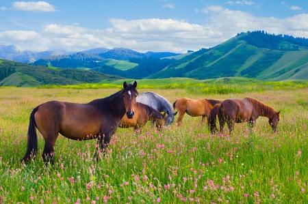 The herd of horses is grazed on a summer green meadow Stock Photo