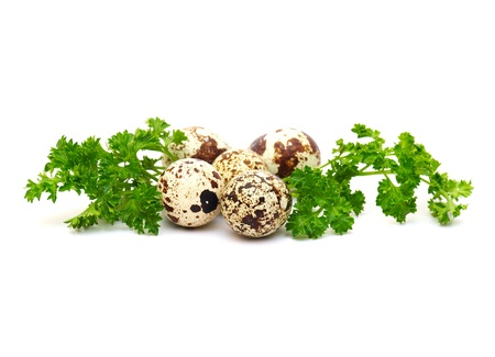 The isolated quail eggs with green leaves of parsley photo