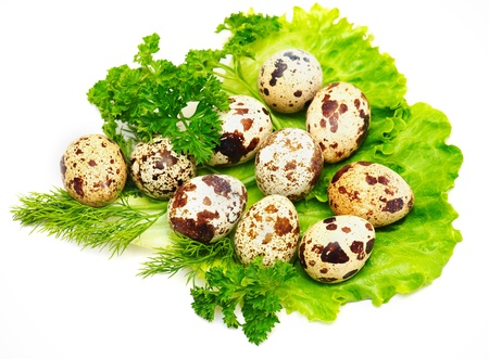 Isolated quail eggs with fresh salad, fennel and parsley photo