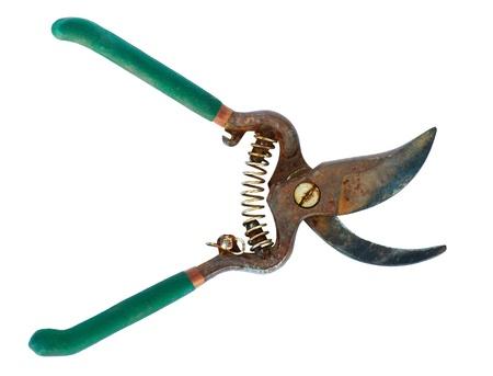 Rusty garden scissors Stock Photo - 13305589