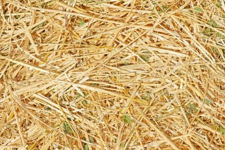 Texture of fresh yellow  straw