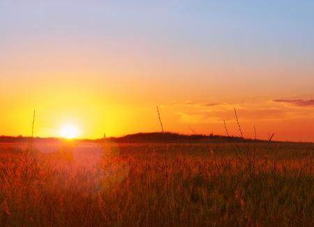 Landscape, sunset in a wheat field. Purple. Stockfoto