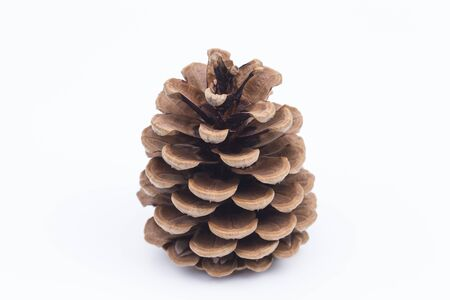 Image shows a pinecone isolated on white Stock Photo
