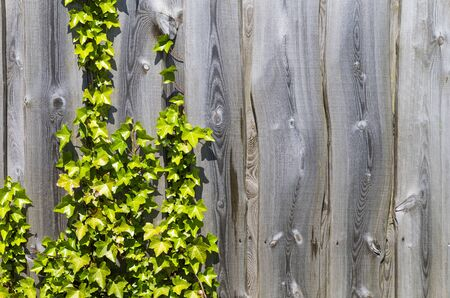 The photo shows a weathered wooden fence with leaves Stock Photo