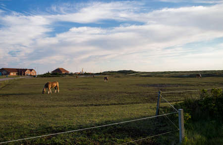 View over a pasture to the port of Baltrum