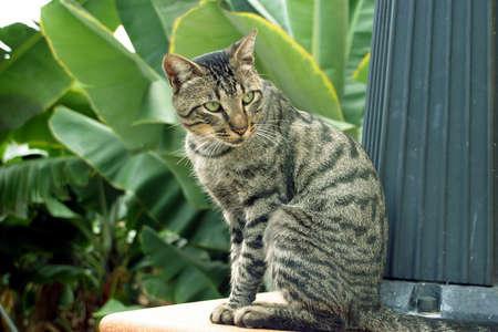 Niedliche Katze entspannenden Nachmittag in Licht  Standard-Bild - 340235