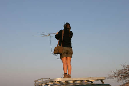 triangulation: Young woman standing on a four wheel drive in the early morning light in Namibia, Africa trying to do a telemetry triangulation on a collared cheetah, leopard or brown hyena Stock Photo
