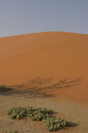 sossusvlei: red dune in the namibian desert with a shadow of a tree and some green plants in front