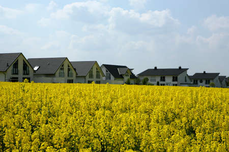 newly built white homesteads in the middle of an agriculture area with a blooming canola field photo