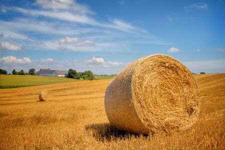 Bales of straw in late summer photo