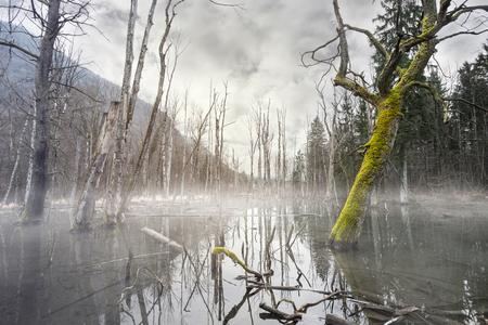 pantano brumoso místico con árboles muertos