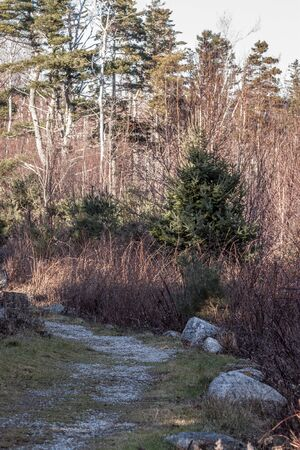 nova scotia: hiking trail at the atlantic coast, Nova Scotia,Graves Island Stock Photo