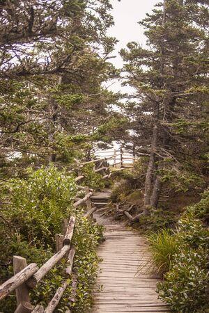 scotia: hiking trail in Nova Scotia Stock Photo