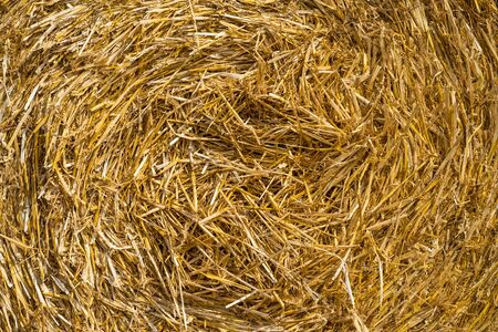 Straw Roll in hard Sunlight, Texture. medium distance Banque d'images