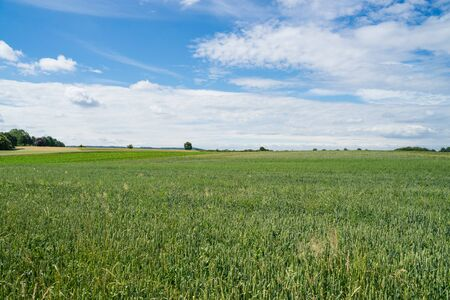 A wide view over the green field to the horizon.
