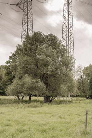 High voltage pylons flank a single tree in the meadows.