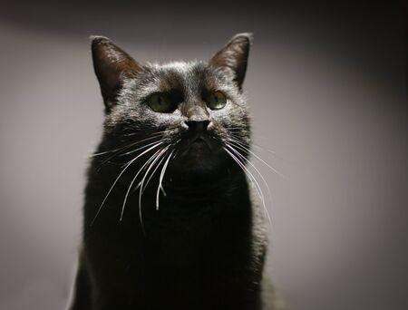 Cat portrait with a faithful stupid look.