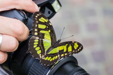 Swallowtail butterfly on a camera, held by the photographer.
