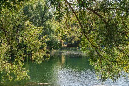 View through a deciduous tree across the lake in the park Rheinaue in Bonn. 版權商用圖片