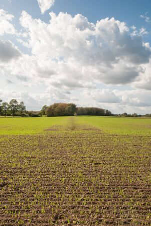 Perspective view over a field with young plants.