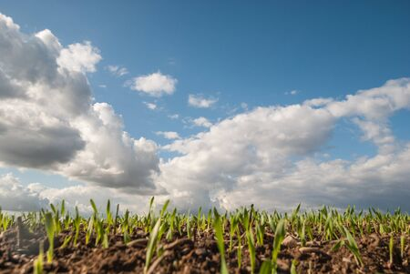The sky is clearing, after a rain shower over a field. Stok Fotoğraf