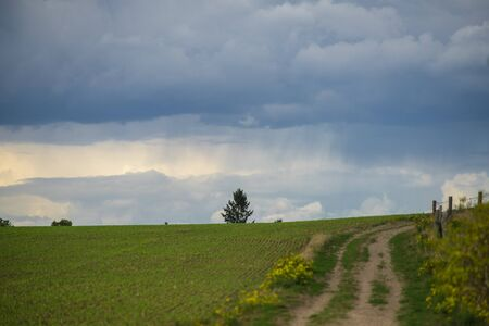 A rain shower over a tree on a hill. View over a field of fresh green.