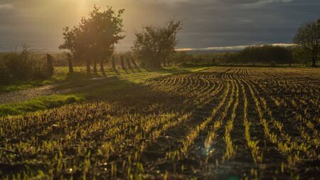 View over a harvested field against the light of the sun. Stok Fotoğraf