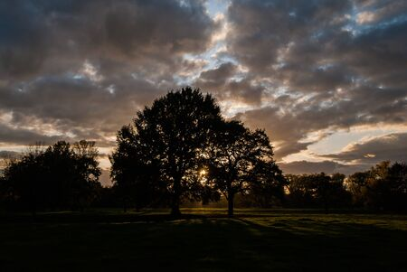 Silhouettes of trees in the sunset over the meadows. Dramatic sky over a dark scene.