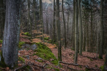 View from the height in an enchanted forest. Stock fotó