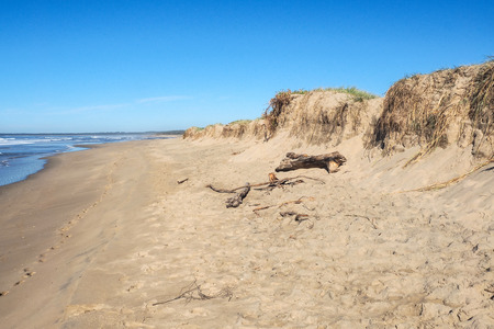 grass roots: A wave-eroded sand dune showing the exposed grass roots. Stock Photo