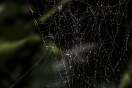 frightful: Background Cobweb old. Stock Photo