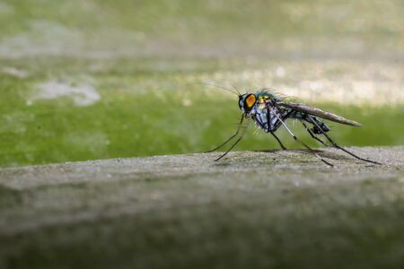 House Fly atop wood.