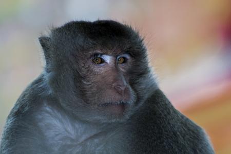 eye Monkey