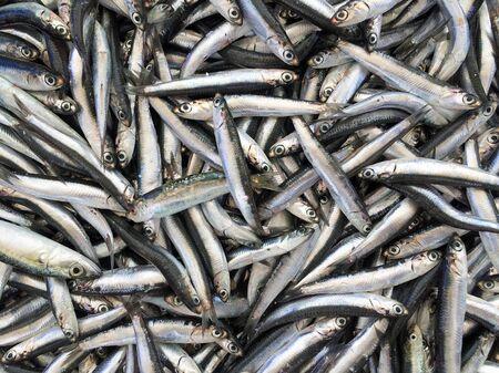 Fresh anchovies background Foto de archivo