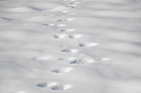 Bear footprints on fresh snow surface