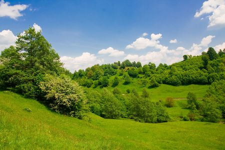 Forest and blue sky Stock Photo - 3851666