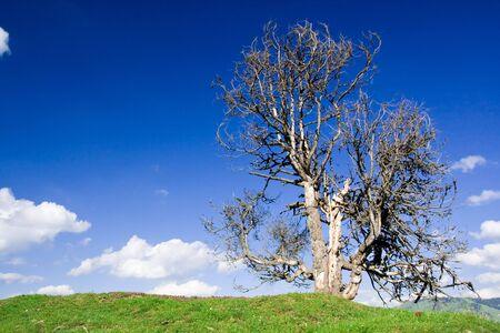 single tree over blue sky Stock Photo - 3851665