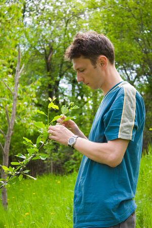 agronomist: Young agronomist examining the trees in an orchard Stock Photo