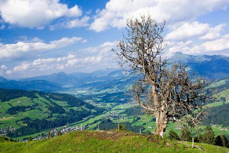 single tree and Tirol landscape Stock Photo - 4182121