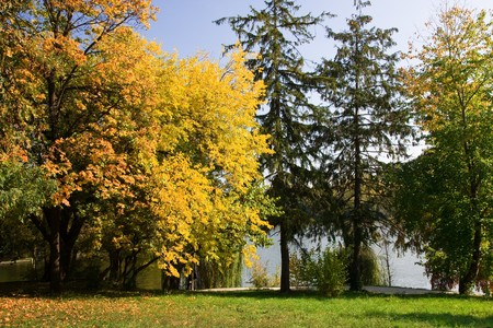 autumn colours in the park Stock Photo - 4241500