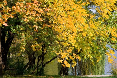 autumn colours in the park Stock Photo - 4241494